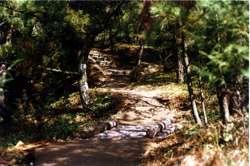 自然色アスファルト舗装